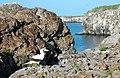 Isla Genovesa, Prince Philip steps, Tower Island, Galapagos - panoramio.jpg