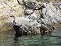 Isola di Bergeggi SV - panoramio (4).jpg