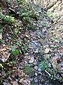 Ison Creek Kimberlite (Elliott County Peridotite, Late Cretaceous, 75 Ma; west of Stephens, Elliott County, Kentucky, USA) 15 (48383229362).jpg