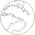 Issyk inscription.png