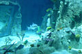 Istanbul Aquarium-11.JPG