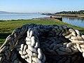 It is ropey - geograph.org.uk - 575089.jpg