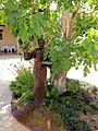 Jacuzzi Family Vineyards & Winery, Sonoma Valley, California, USA 17.jpg