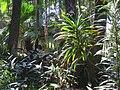 Jardim Botânico de São Paulo - general view IMG 0183.jpg
