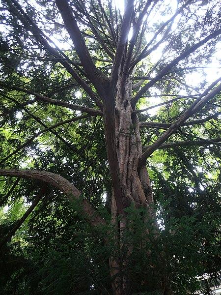 File jardin albert kahn boulogne billancourt un arbre - Jardin japonais boulogne billancourt ...