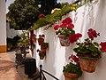 Jardin Botánico Molino de Inca. - panoramio.jpg