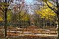 Jardin du Luxembourg in Fall 2019 4.jpg