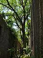 Joseph island hall tree.jpg