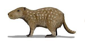 Dinomyidae - Josephoartigasia