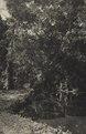 KITLV - 88314 - Kleingrothe, C.J. - Medan - Canal near the plantation Loeboe Dalam (Lubu Dalam) of the Deli Company in Deli - 1905.tif