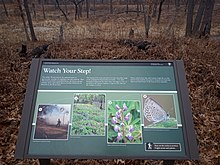 Large brown sign with pictures of blue butterflies next to a trail through oak savanna