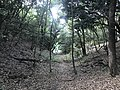 Kasuya Research Forest of Kyushu University 5.jpg