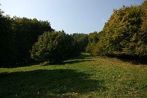 Pest County - Image: Kemence, Hungary panoramio Kaszás Tibor (4)