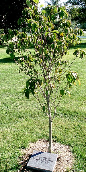 Kevin Granata - A tree on the St. Francis de Sales High School campus, planted in memory of Granata, who was a graduate of the school.