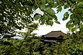 Kiomizu Fortune (2616871300).jpg