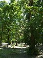 Kirovograd Kovalivs'kiy Park 04 (YDS 4772).JPG