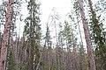 Kittilä, Finland - panoramio (22).jpg