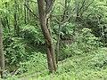 Kosmaj forest 14.jpg