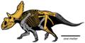 Kosmoceratops richardsoni.png