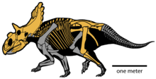 Diagram of a dinosaur skeleton on four legs