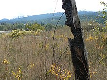View of an overgrown field with a rotting fencepost in the foreground and a range of hills in the distance