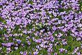 Krokusblüte in Drebach..IMG 0841WI.jpg