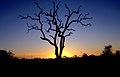 Kruger Satara camp JF.jpg