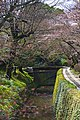 Kyoto, 桜, sakura, Philosophers Walk - panoramio (2).jpg