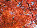 Kyoto Japan0536.JPG