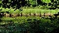 Laghetto della Turbera. Parco dei Lagoni di Mercurago. Arona (Novara).jpg