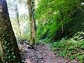 Lagodekhi Managed Reserve.jpg