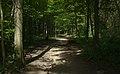 Lainzer Tiergarten (1) IMG 1484.jpg