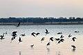 Lake Burrumbeet (24783635605).jpg