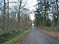 Lane through woodland - geograph.org.uk - 288235.jpg