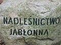 Lasy chojnowskie głaz Jabłonna fot Kamil Korbik MojePiasecznoPl.jpg