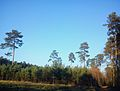Lasy zakrzewskie.jpg