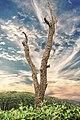 Lawachara National Park 01.jpg