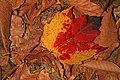 Leaf, Mason Neck State Park, Mason Neck, Virginia.jpg