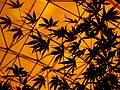 Leaves in iran برگ گلها و گیاهان ایرانی 21.jpg