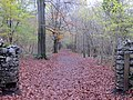 Leigh Woods - November 2013 - panoramio.jpg