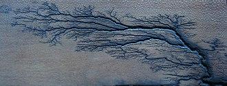 Lichtenberg figure - Lichtenberg branching figure in leopardwood