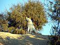 Les animaux de la valée de Rayane - panoramio.jpg