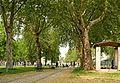 Les arbres centenaires du parc de Bercy à Paris.jpg