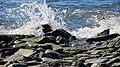 Little Brewster Island, Boston. - panoramio (25).jpg