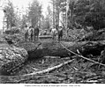 Loggers in the woods, Wynooche Timber Company, near Montesano, ca 1921 (KINSEY 1611).jpeg