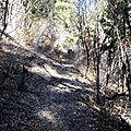 Lookin up the Road Canyon Trail (5508092475).jpg