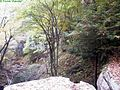Looking-over-waterfall - West Virginia - ForestWander.jpg