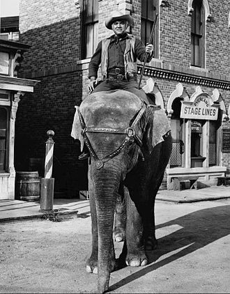 Ben Cartwright (Lorne Greene) on an elephant. Lorne Greene Bonanza 1964.JPG