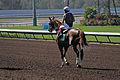 Los Alamitos Sept 2014 IMG 6832 (15131243657).jpg