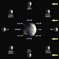 Lunar-Phase-Diagram.png